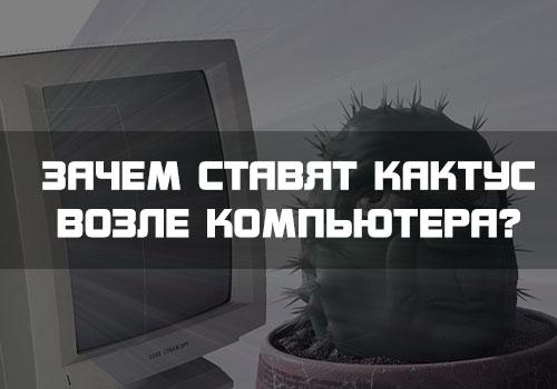 Зачем стоит Кактус возле компьютера?