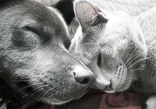 Настоящие приятели - кошка и собака