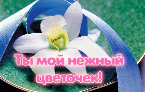 ты мой цветочек