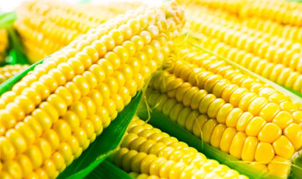 Полезная желтая кукуруза