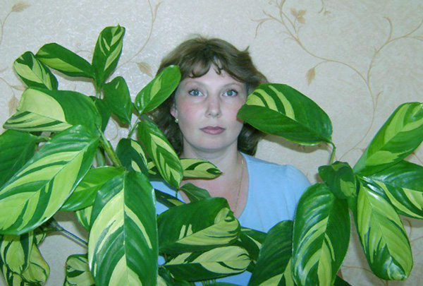 Как выращивать калатею лубберса?