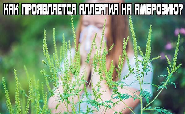 аллергия на амброзию - как проявляется