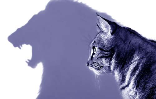 Амбициозность кота