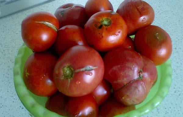 Испорченные и треснутые помидоры