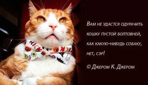 Цитаты про кошек (10)
