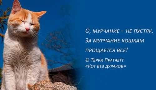Фразы про кошек и мурчание