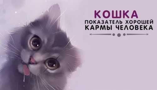 Фразы про кошек!