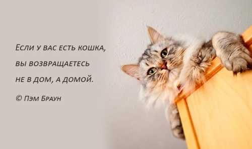 Если есть кошка