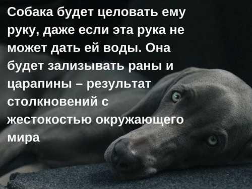 Собака видит мир носом