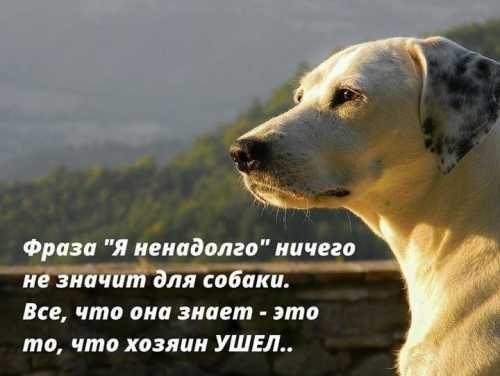 Ненадолго покидая пса