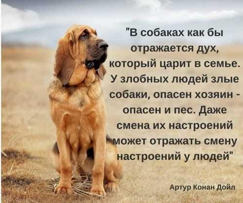 В собаках отражается дух