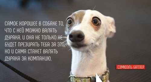 Цитата о собаке