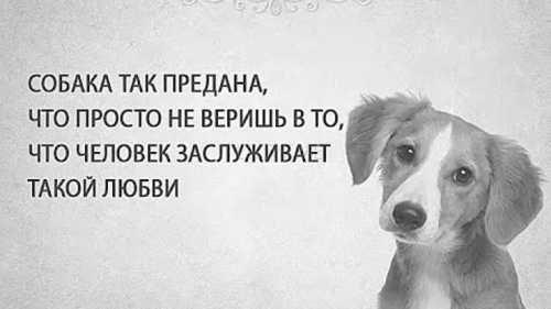 Цитаты и фразы про собак !