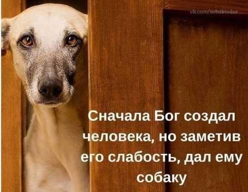 Бог дал собаку