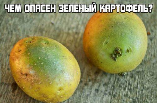 Можно ли есть зеленый картофель (4)