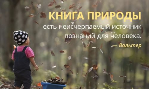 цитаты про книгу природы