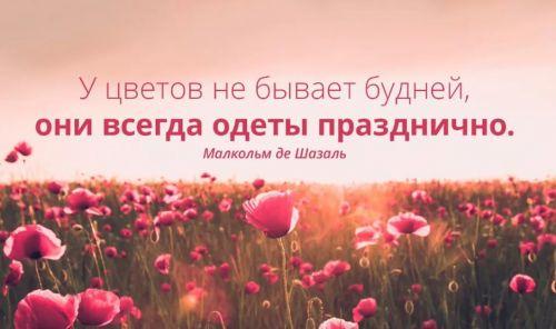 цветы фразы и будни