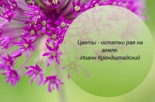 цветы фразы и цитаты о рае