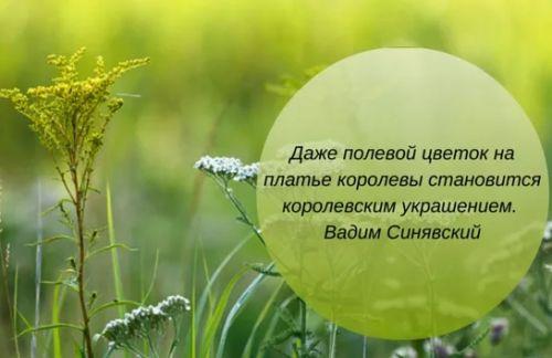 цветы фразы полевой