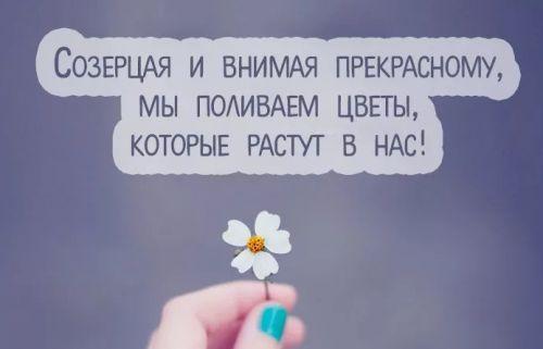 цветы растут в нас