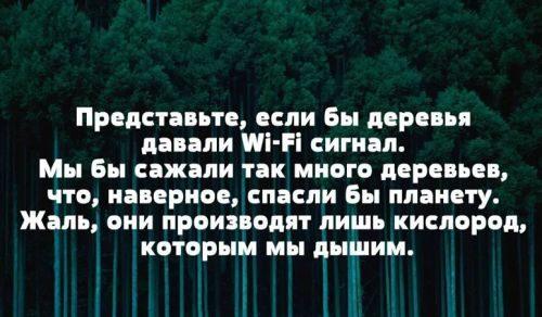 Деревья делают кислород