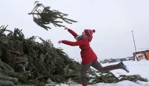 Когда выбрасывают новогоднюю елку
