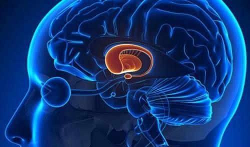 мозг обоняние