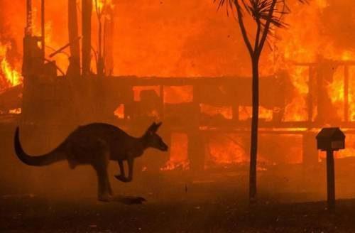пожары австралии и кенгуру
