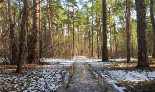 россия теплая зима и грязый лес