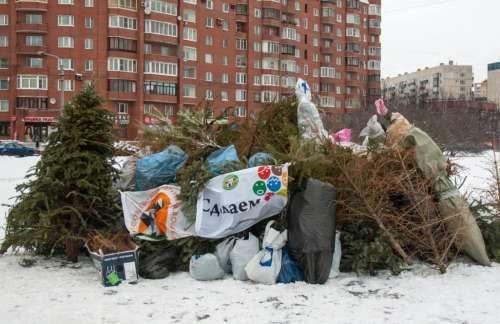 выбрасывают новогоднюю елку