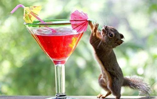 Белка алкоголичка