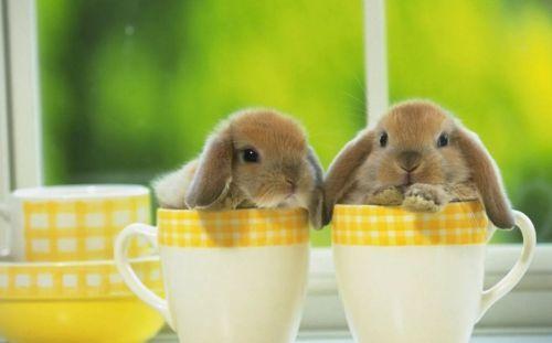 Милые кролики в кружке