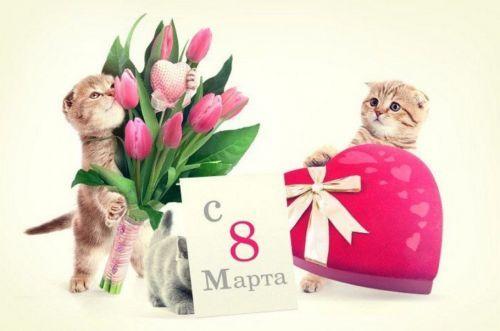 С котатами и мартом