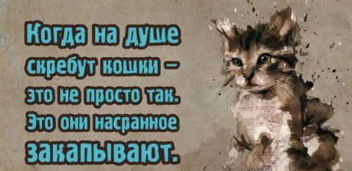 Кошки закапывают
