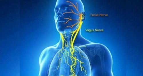 блуждающий нерв Причины нарушения работы