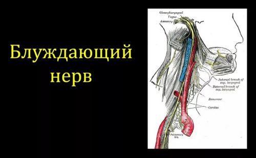 блуждающий нерв успокоить