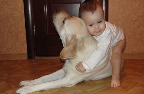 Борьба с псом
