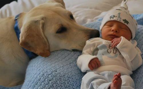 Добрая собака и малыш