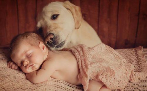лабрадор и грудник спит