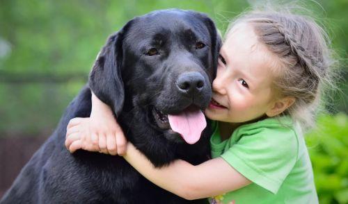 лабрадор с ребенком девочкой