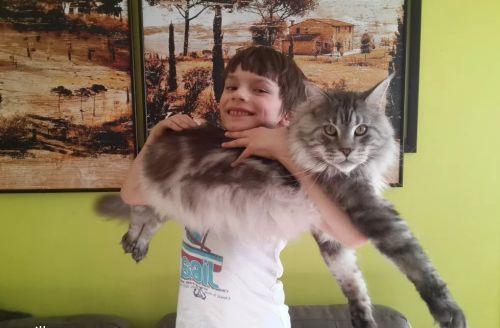 мальчик и большой кот