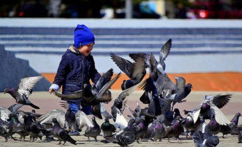 Мальчик и голуби