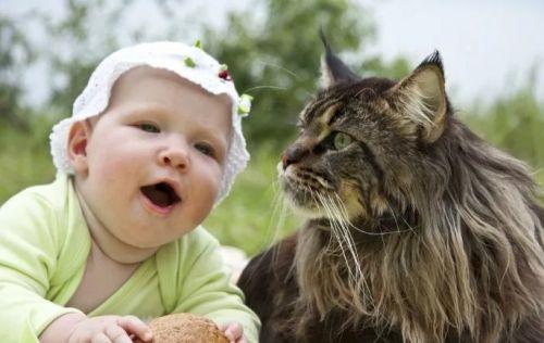 Мейн кун и малышка