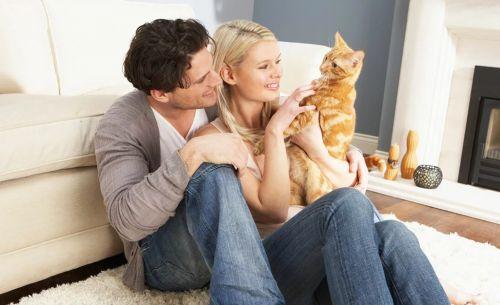 муж и жена переезд с кошкой