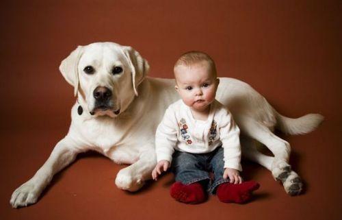 Собака с мелким