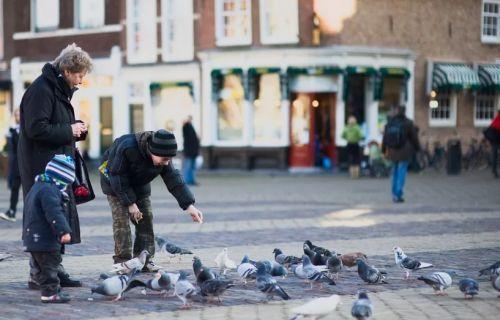 Уличные голуби и туристы в городе